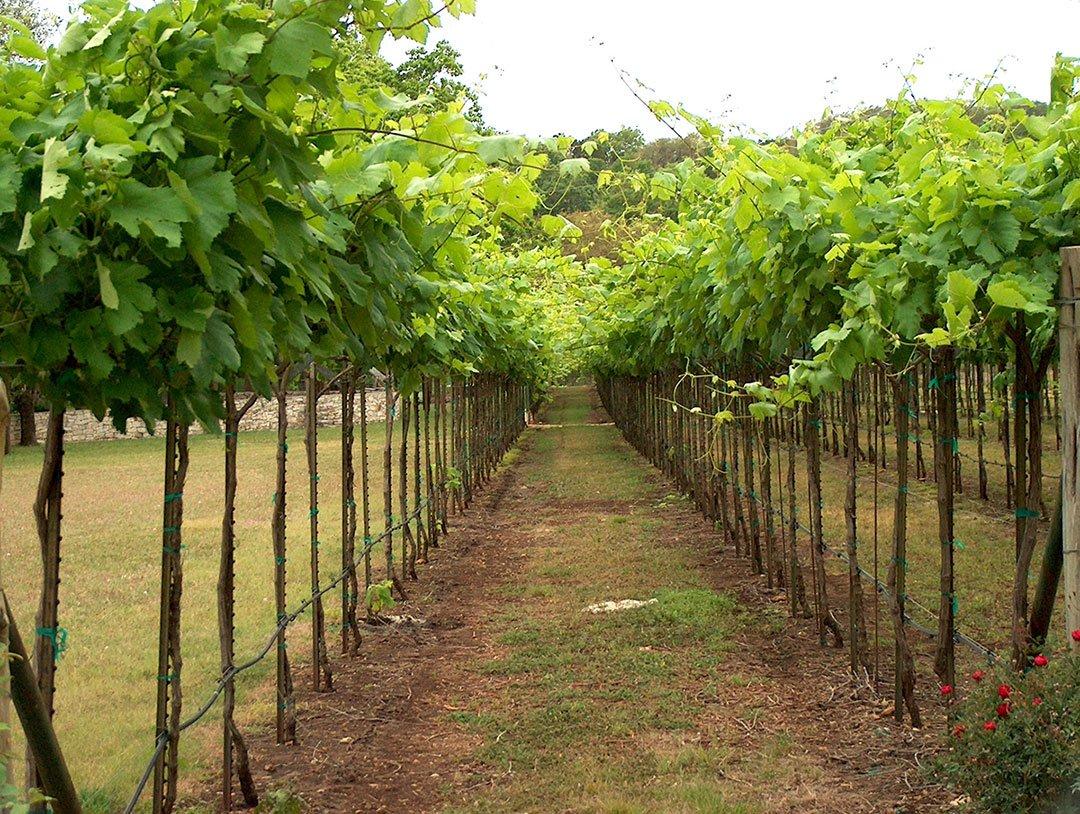 The Driftwood Wine Trail